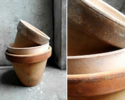 Nalot na doniczkach ceramicznych1 wykorzystano do artykułu 250x200 - NALOT NA DONICZKACH CERAMICZNYCH – JAK SIĘ GO POZBYĆ?