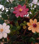 DSC 0130 kopia 130x145 - Kwiat