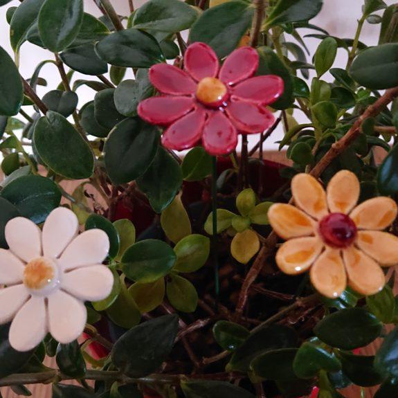 DSC 0130 kopia 575x575 - Kwiat
