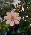 DSC 0146 130x145 - Kwiat