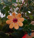 DSC 0147 130x145 - Kwiat