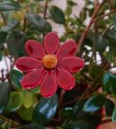 DSC 0151 130x145 - Kwiat