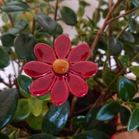 DSC 0151 450x450 - Home Flower