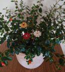 DSC 0153 kopia 130x145 - Kwiat
