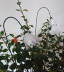 DSC 0174 kopia 130x145 - Kwiat