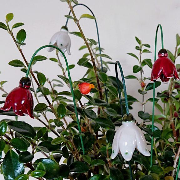 DSC 0190 kopia 575x575 - Kwiat