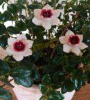 DSC 0195 e1553552051944 130x145 - Kwiat