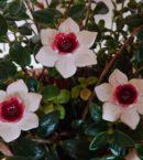 DSC 0196 kopia 130x145 - Kwiat