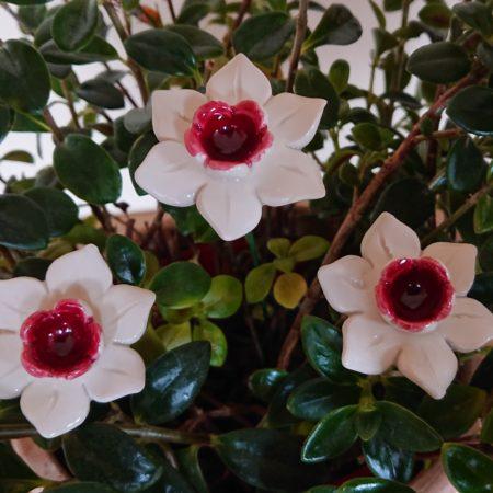 DSC 0196 kopia 450x450 - Home Flower