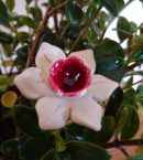 DSC 0204 e1553551401228 130x145 - Kwiat