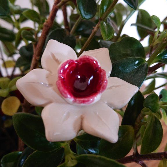 DSC 0204 e1553551401228 575x575 - Kwiat