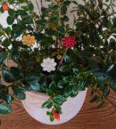 DSC 0216 130x145 - Kwiat