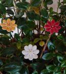 DSC 0216 kopia 130x145 - Kwiat