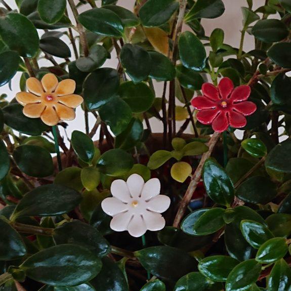 DSC 0216 kopia 575x575 - Kwiat