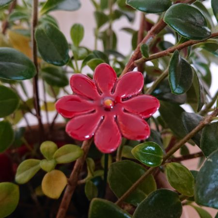 DSC 0218 450x450 - Home Flower