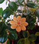 DSC 0219 130x145 - Kwiat