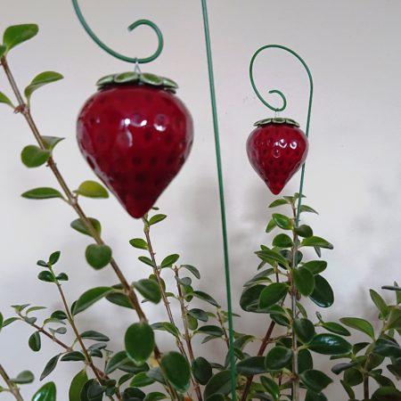 DSC 0255 kopia 450x450 - Home Flower
