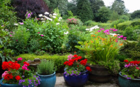 strefadoniczek blog welcome 280x175 - Home Flower